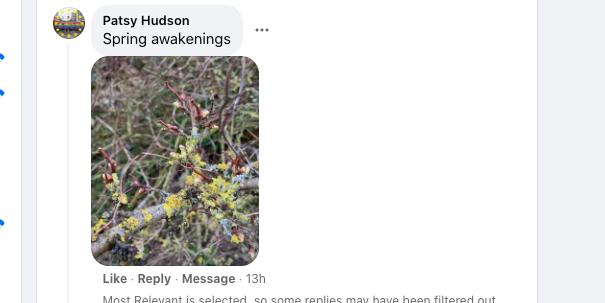 Patsy Hudson - Spring Awakenings